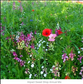 Wild Flower Seeds-Sold by Kg-Perfect for Urban lanscaping - IMPACT RANGE by John Chambers ©